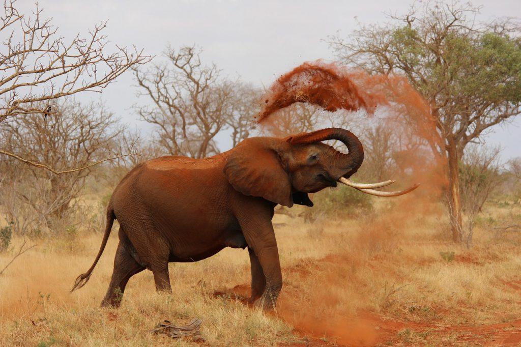 Was hat der Elefant mit unserer Ernährung zu tun?